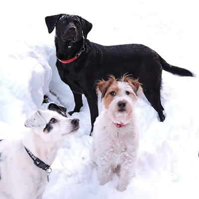 My dogs group photo